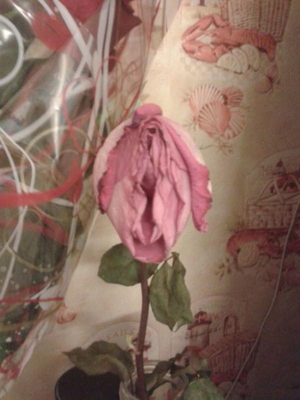 【※草※】な に 、 心 が 歪 ん で る と コ レ が H な 画 像 に 見 え る だ と ・・・???(画像あり) 05